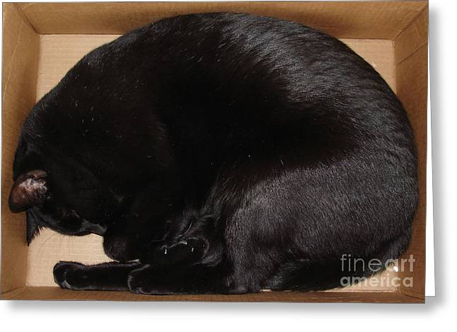 Greeting Card featuring the photograph Cat In The Box by Kerri Mortenson