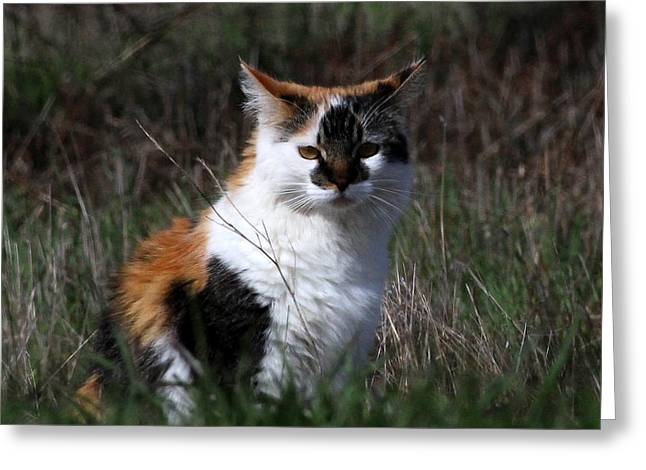 Cat In The Field Greeting Card