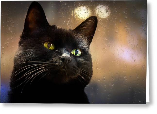 Cat In The Window Greeting Card by Bob Orsillo