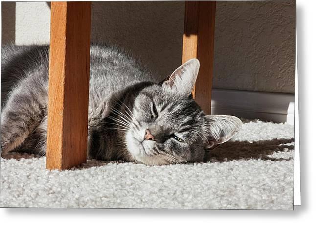 Cat Lying In The Sun Greeting Card