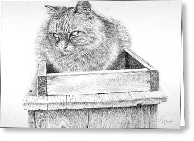 Cat On A Box Greeting Card by Arthur Fix