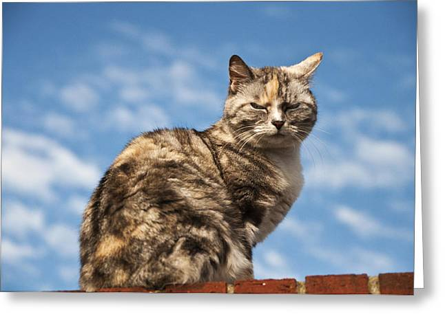 Cat On A Hot Brick Wall Greeting Card by Steve Purnell