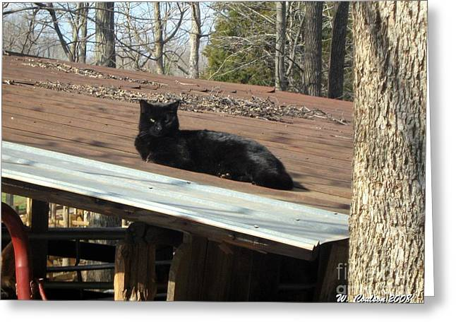 Cat On A Tin Roof Greeting Card