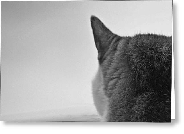 Cat On Alert Greeting Card