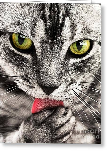 Greeting Card featuring the photograph Cat by Paul Fearn