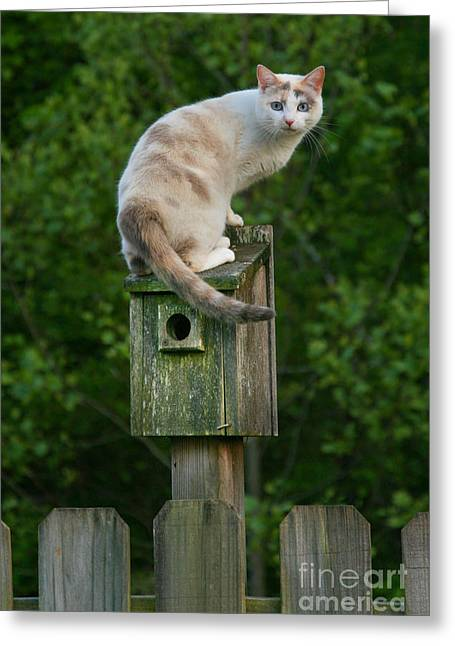 Cat Perched On A Bird House Greeting Card by Jt PhotoDesign