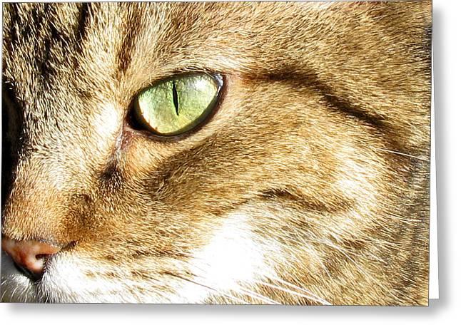 Cat Portrait 2 Greeting Card