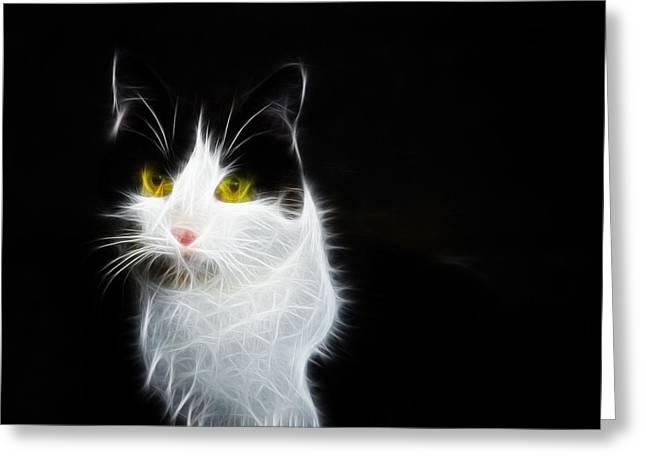 Cat Portrait Fractal Artwork Greeting Card by Matthias Hauser