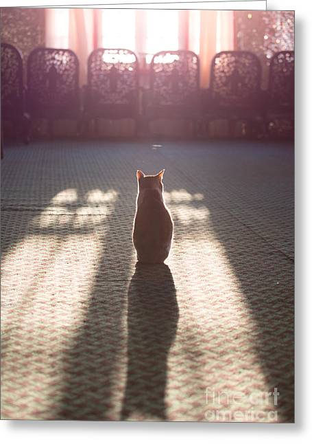 Cat Sitting Near Window Greeting Card by Matteo Colombo