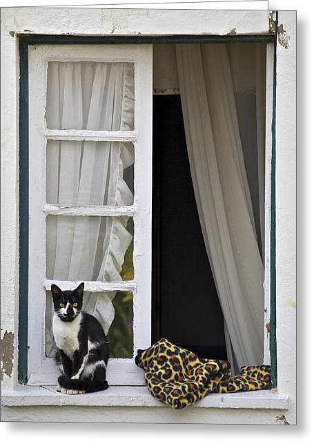 Cat Sitting On The Ledge Of An Open Wood Window Greeting Card by David Letts