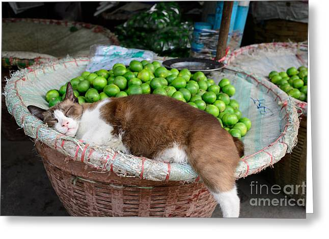 Cat Sleeping Among The Limes Greeting Card