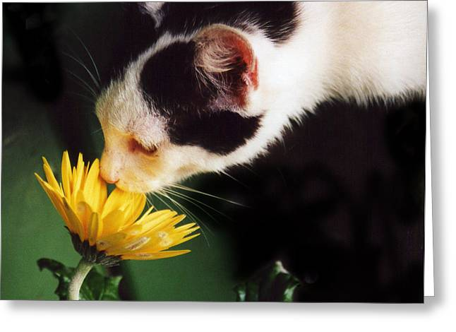 Cat Smelling Flower Greeting Card