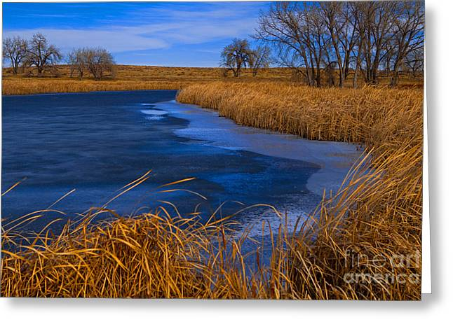Cat Tails And Ice Greeting Card