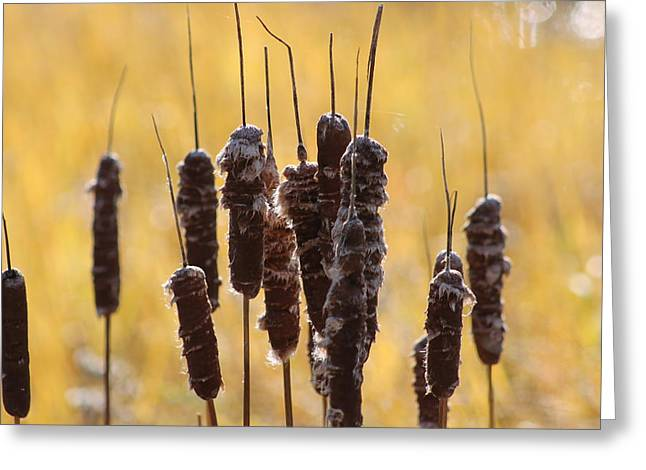 Cat Tails In November Greeting Card