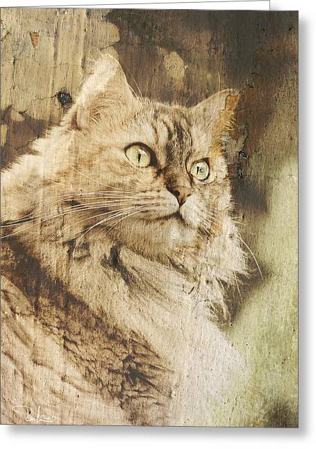 Cat Texture Portrait Greeting Card