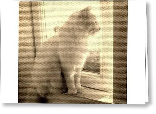 #cat #vintage #white Greeting Card