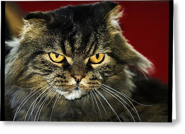 Cat With An Attitude Greeting Card by Robert Culver