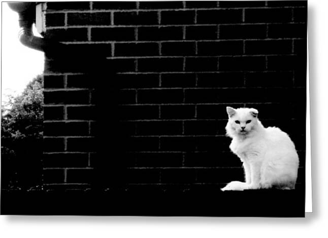 Cat With The Floppy Ear In Black And White Greeting Card by Isabella F Abbie Shores FRSA