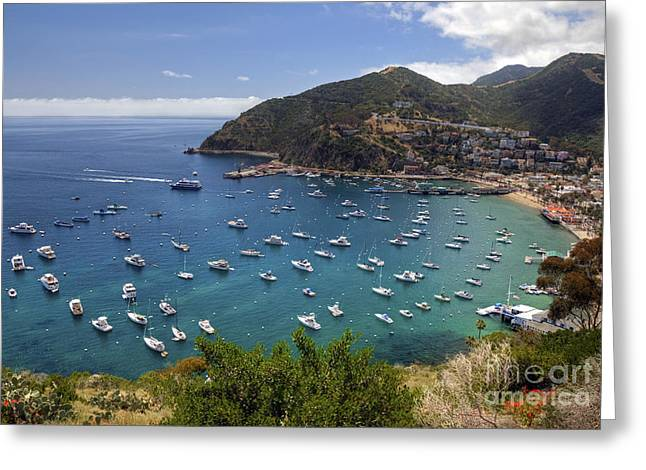Catalina Island Greeting Card by Eddie Yerkish