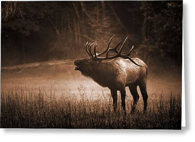 Cataloochee Bull Elk In Sepia Greeting Card