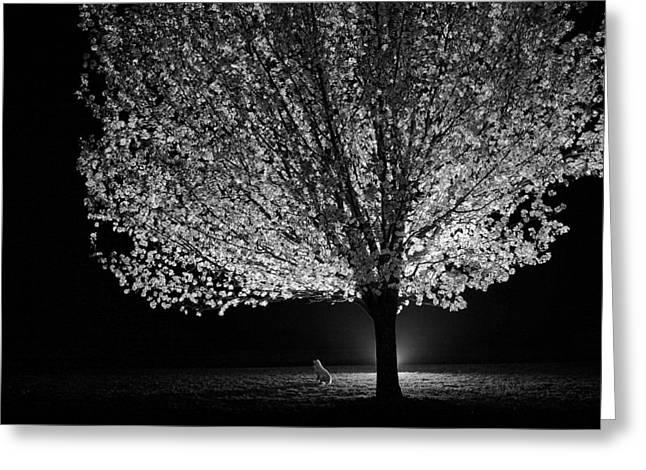 Catatonic Light Greeting Card by Charrie Shockey