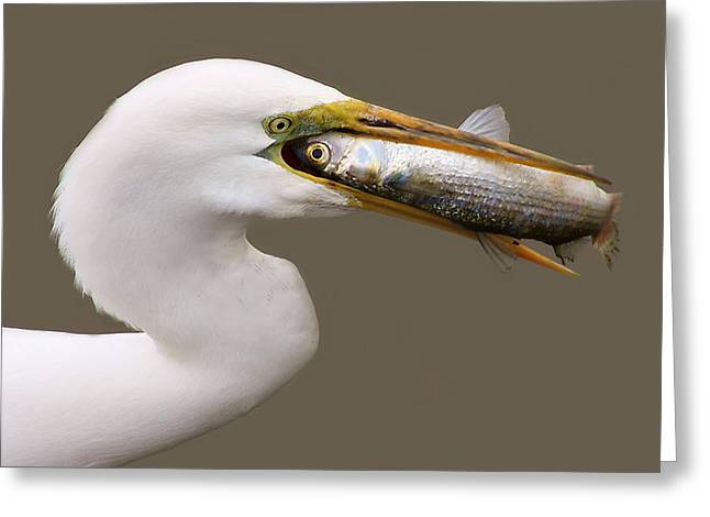 Catch Of The Day Greeting Card by Paulette Thomas