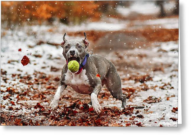 Catch The Ball. Greeting Card