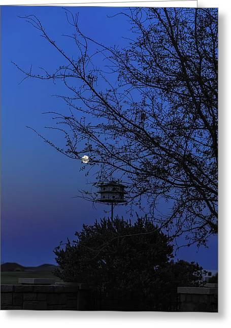 Catching Moonlight Greeting Card by Nancy Marie Ricketts