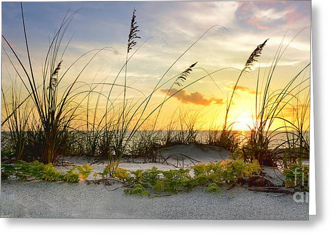 Cativa Beach Greeting Card by Jon Neidert
