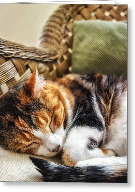 Catnap Greeting Card by Anthony Citro
