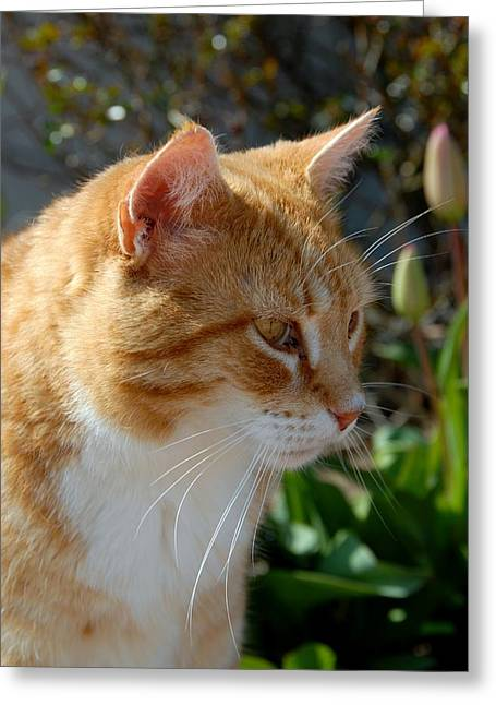Cats 54 Greeting Card by Joyce StJames