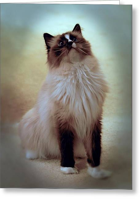 Cats 71 Greeting Card by Joyce StJames
