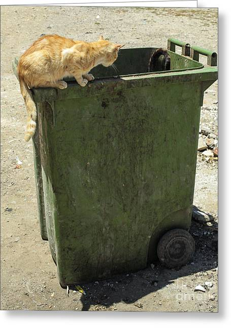 Cats On And In Garbage Container Greeting Card