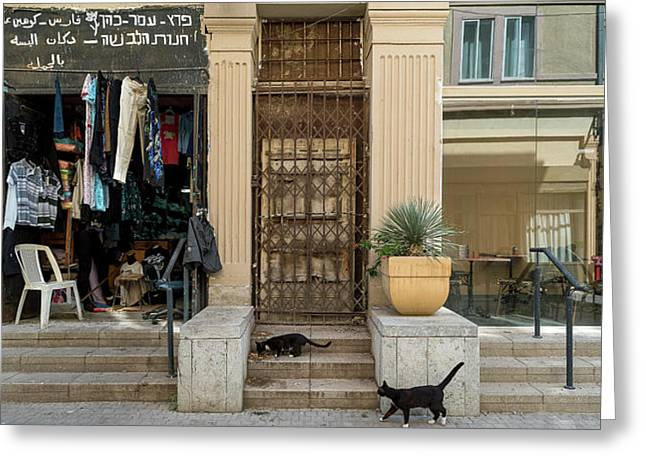 Cats On The Steps Of A Clothing Store Greeting Card
