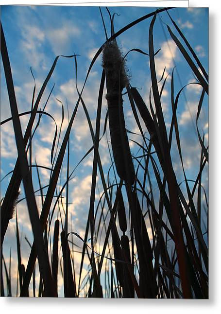 Greeting Card featuring the photograph Cattail Sky by Alicia Knust