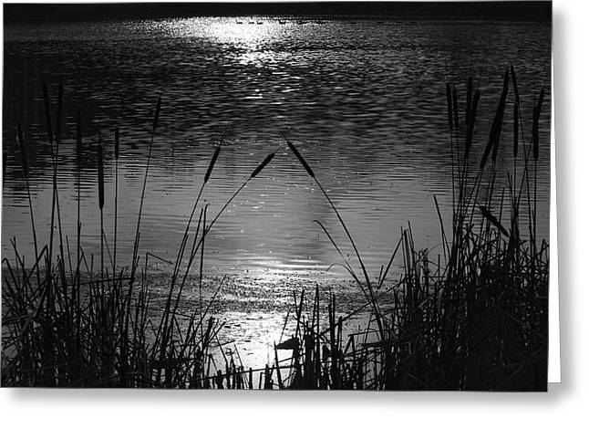 Cattails 3 Greeting Card by Susan  McMenamin