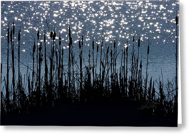 Cattails And Sparkle Greeting Card