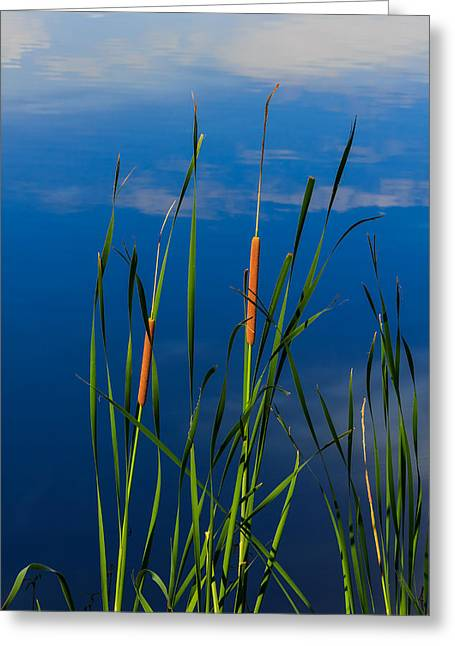 Cattails At Overholster Greeting Card by Doug Long