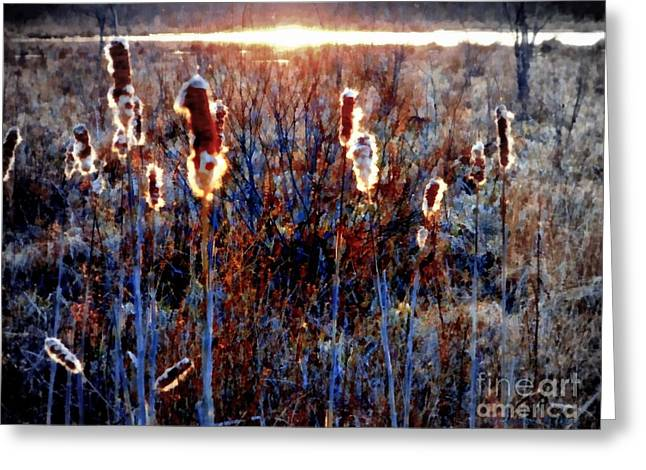 Cattails - Evening Glow On The Marsh Greeting Card by Janine Riley