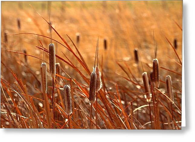 Greeting Card featuring the photograph Cattails  by Lynn Hopwood