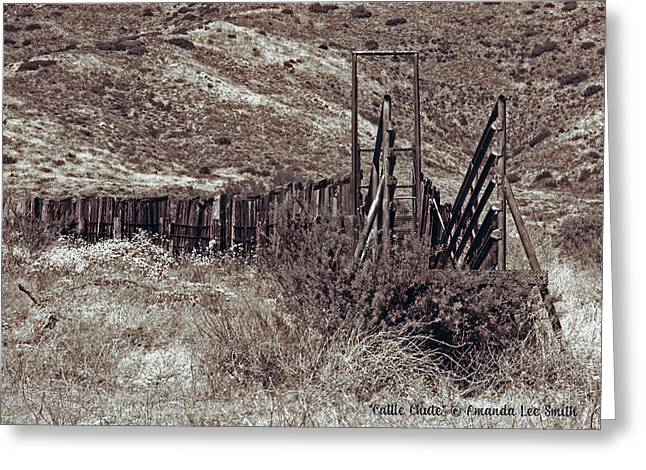 Cattle Chute Greeting Card by Amanda Smith