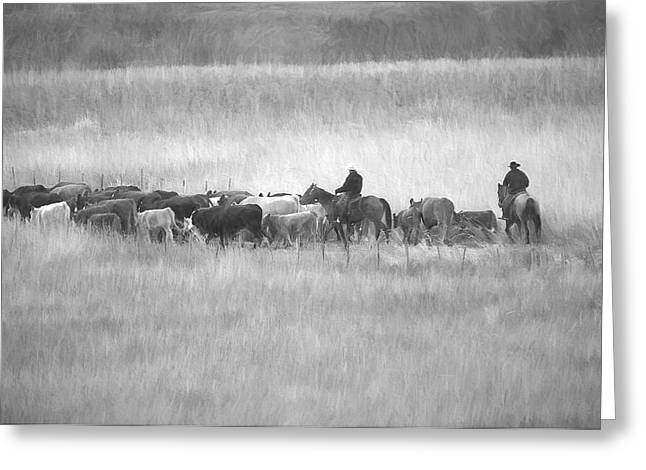 Cattle Drive Greeting Card by Sharon Talson
