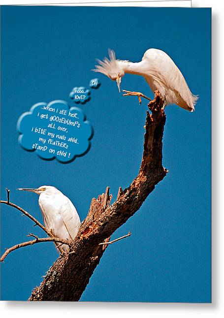 Greeting Card featuring the photograph Cattle Egret Goosebumps by Donna Proctor