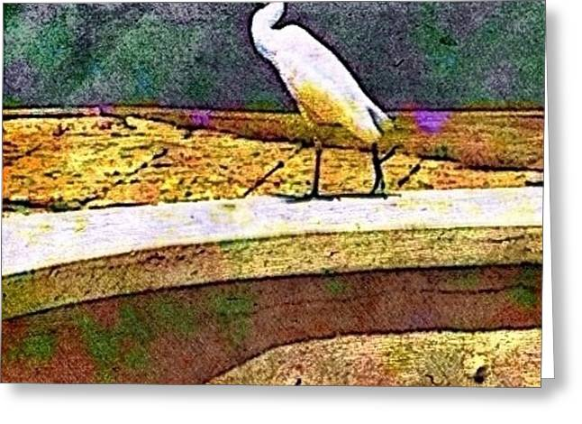Cattle Egret In Town - Square Greeting Card