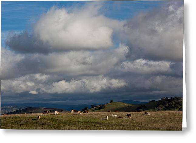 Cattle Grazing In A Field, Santa Greeting Card by Panoramic Images