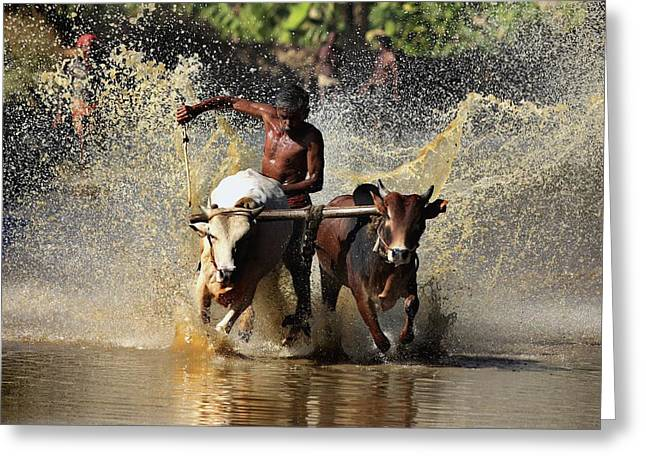 Cattle Race In Kerala South India Greeting Card by Pradeep Subramanian