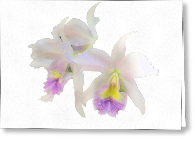 Cattleya Orchids Softly Greeting Card by Rosalie Scanlon
