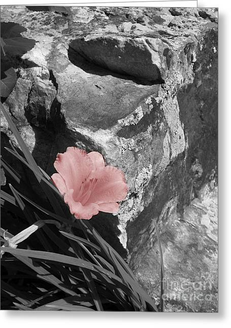 Caught Between A Rock And A Hard Place Greeting Card by Janice Westerberg
