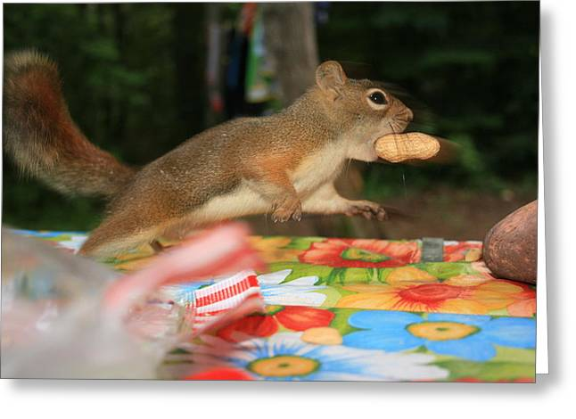 Greeting Card featuring the photograph Caught In The Act by Paula Brown