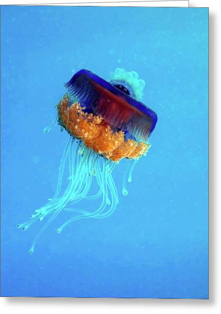 Cauliflower Jellyfish Greeting Card by Louise Murray